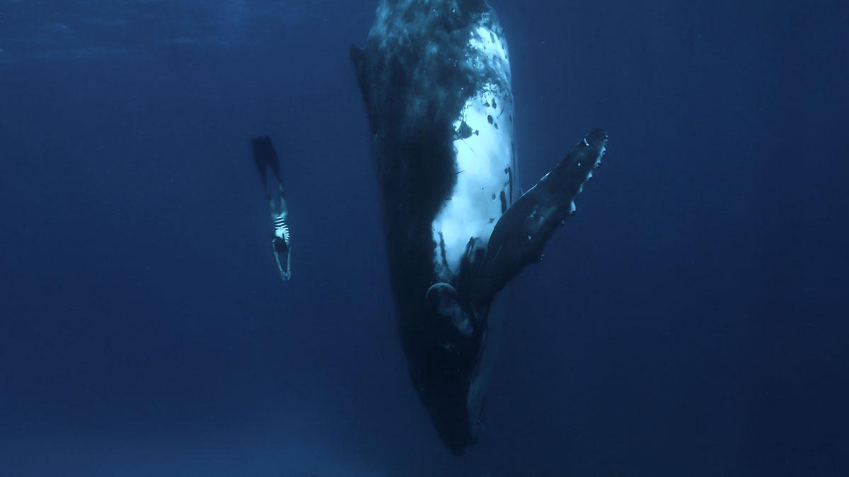Pauline et la Balein