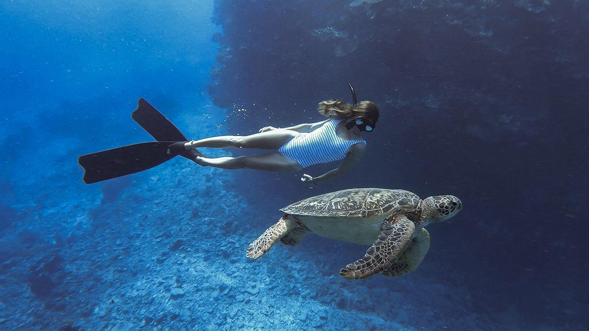 Pauline et la tortue